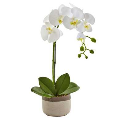 19 in. Phalaenopsis Orchid in Ceramic Pot - Home Depot