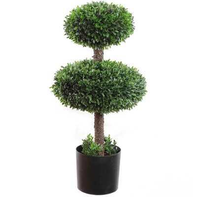 Topiary Boxwood in Pot - Wayfair