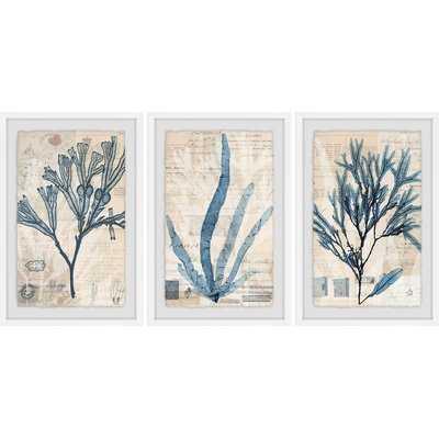 'Seaweed Arrangement' 3 Piece Framed Graphic Art Print Set - Wayfair