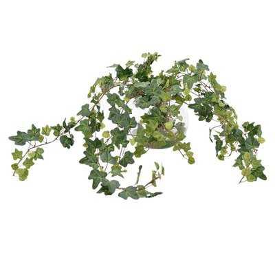 Ivy Plant in Vase - Wayfair