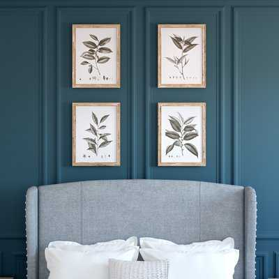 'Aba Botanical' 4 Piece Framed Graphic Art Print Set - Wayfair