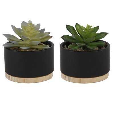 Ceramic Desktop Succulent Plant with Wood Base - AllModern