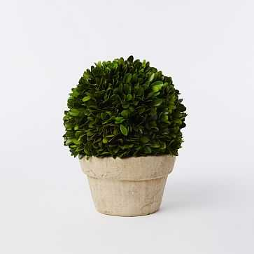 Boxwood Tree, Ball + Pot, Small - West Elm