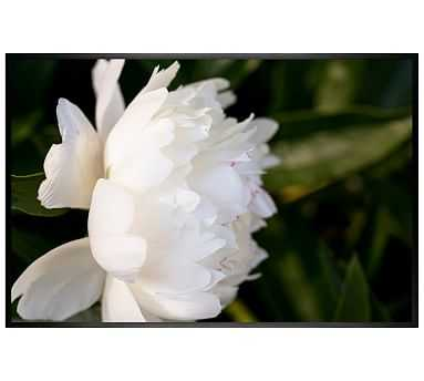 """White Peony Framed Print by Cindy Taylor, 42 x 28"""", Wood Gallery Frame, Black, No Mat - Pottery Barn"""