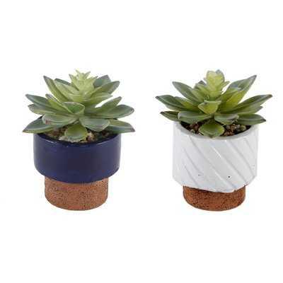 2 Piece Navy Reverse Desktop Succulent Plant in Pot - Wayfair
