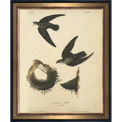 'American Swift' Framed Vintage Print on Canvas - Wayfair