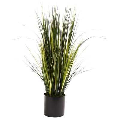 Onion Grass Floor Plant in Pot - Wayfair