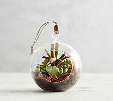 Live Hanging Globe Terrarium - Pottery Barn