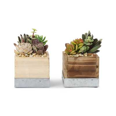 Pure Beauty Farms 4 in. Succulent in Wood Box Combo 4 in. (2-Plants) - Home Depot