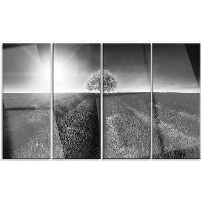 Beautiful Black White Lavender Field' 4 Piece Photographic Print on Metal Set - Wayfair