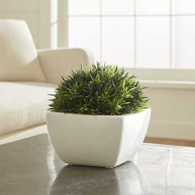 Potted Moss - Crate and Barrel