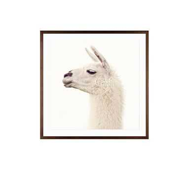 "Llama by Jennifer Meyers, 25 x 25"", Wood Gallery, Espresso, Mat - Pottery Barn"