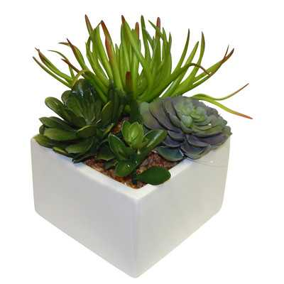 Succulent Desk Top Plant in Planter - Wayfair
