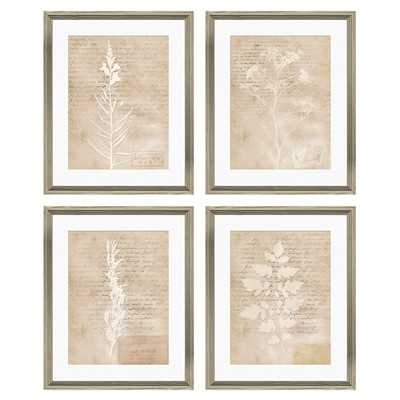 Vintage Botanical Framed Print - Wayfair