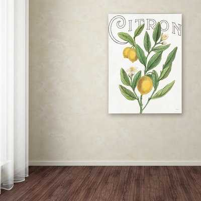'Classic Citrus V' Graphic Art Print on Wrapped Canvas - Wayfair
