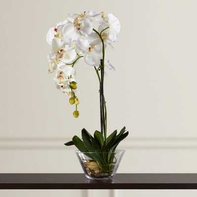 Phalaenopsis Silk Orchid in Glass Vase - Birch Lane