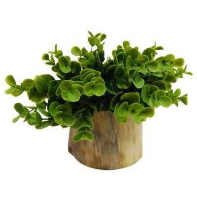 Faux Naturalist Eucalyptus Bonsai Desk Top Plant in Planter - Wayfair