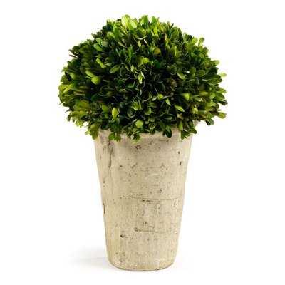 Boxwood Topiary in Planter - Birch Lane