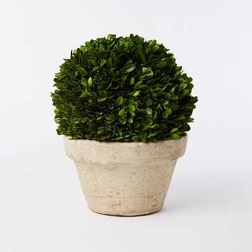 Boxwood Tree, Ball + Pot, Medium - West Elm
