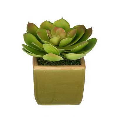Artificial Echevaria Succulent Desk Top Plant in Pot - Wayfair