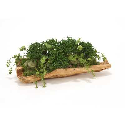 Mixed Succulent Greenery Desk Top Plant in Tray - Birch Lane