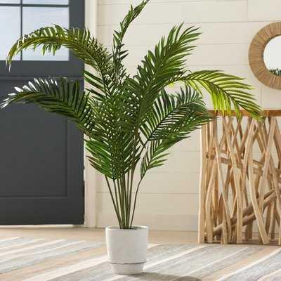 Esters Floor Palm Plant in Pot - Birch Lane