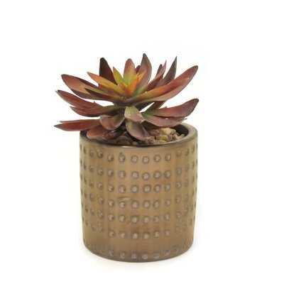 Succulent Plant in Dimpled Planter - Wayfair