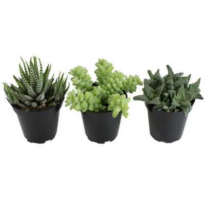 3.5 in. Trip to the Zoo (3-Pack) - Home Depot