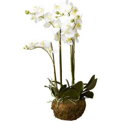 Phalaenopsis Faux Orchids Floral Arrangement - Birch Lane