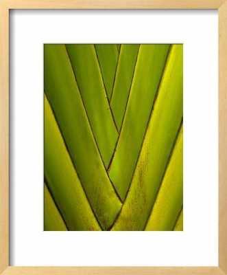 Detail of Palm Leaf - art.com