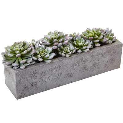 Succulent Garden Desk Top Plant in Planter - Birch Lane