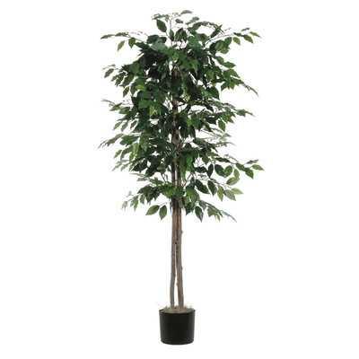 Berry Ficus Tree in Pot - AllModern