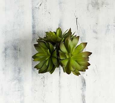 Faux Thorne Succulent, Green - Set of 3 - Pottery Barn