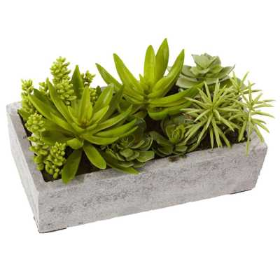 Succulent Garden with Concrete Planter - Home Depot