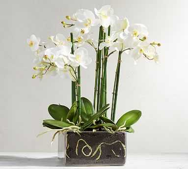 Faux Orchid Phalaenopsis Arrangement in Square Vase - Pottery Barn