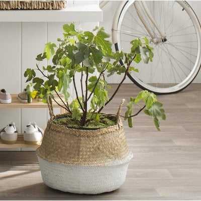 Seagrass Basket with Handles - Wayfair