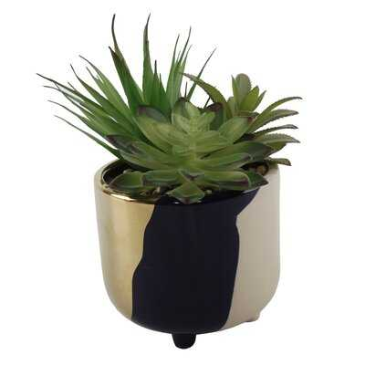 Garden Tone Footed Ceramic Cactus/Agave Succulent in Pot - Wayfair