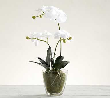 Faux Orchid in Glass Vase - Pottery Barn