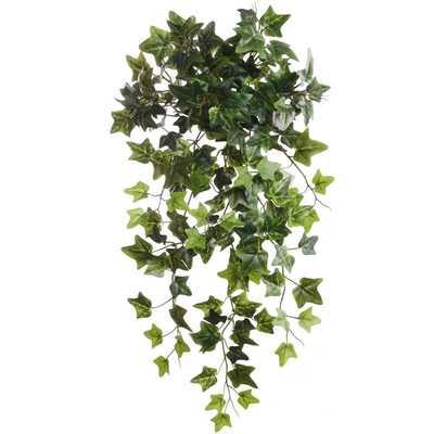 """19"""" Hanging English Ivy Plant (Set of 6) - Wayfair"""