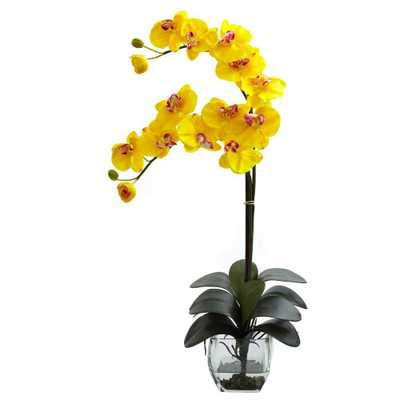 Double Phalaenopsis Orchid with Vase Arrangement in Yellow - Home Depot