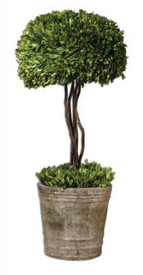 Preserved Boxwood, Tree Topiary - Hudsonhill Foundry