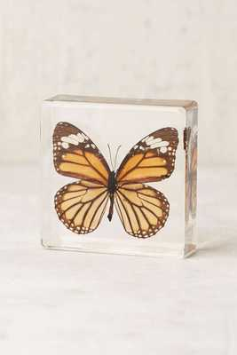 Butterfly Decor Sculpture - Orange - Urban Outfitters