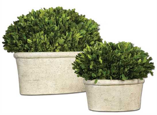 Preserved Boxwood, Oval Domes, S/2 - Hudsonhill Foundry