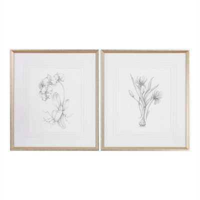 "Botanical Sketches, S/2 - 28"" x 32"" - Silver/Taupe Frame with Mat - Hudsonhill Foundry"