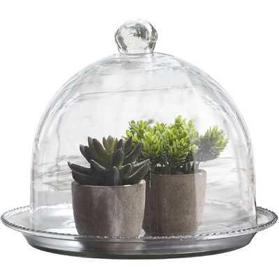 Beaded Glass Terrarium - Wayfair
