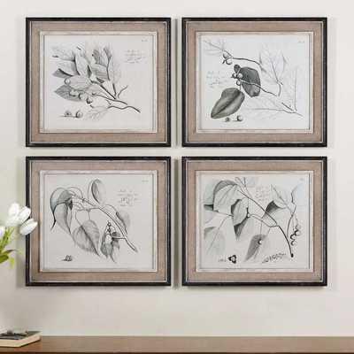 Uttermost Grace Feyock 'Sepia Leaf Study' 4-piece Canvas Art Set - Overstock