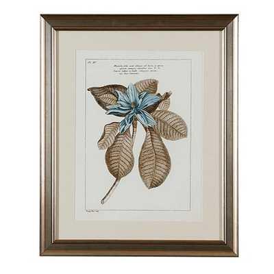 Buchoz Botanical Art - framed Print 1 -  23x19 - Ballard Designs
