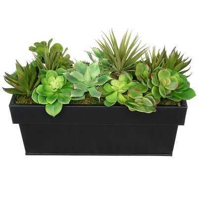 Artificial Succulent in Planter - Wayfair