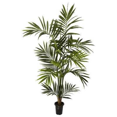 """Kentia Palm Tree in Pot"" - Wayfair"