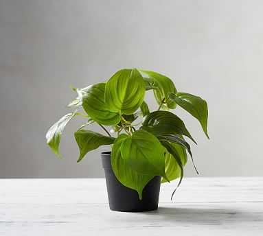 Faux Potted Pothos Houseplant - Pottery Barn